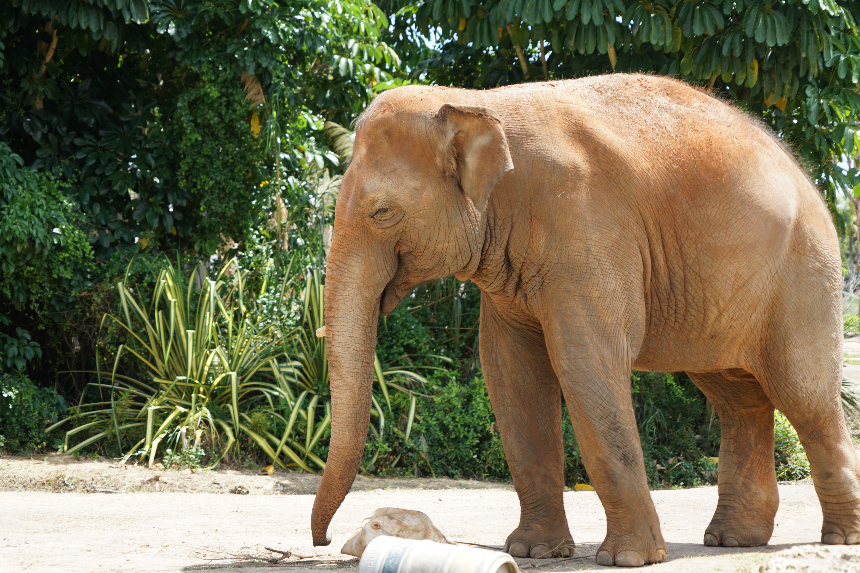 Photo of Brown Elephant