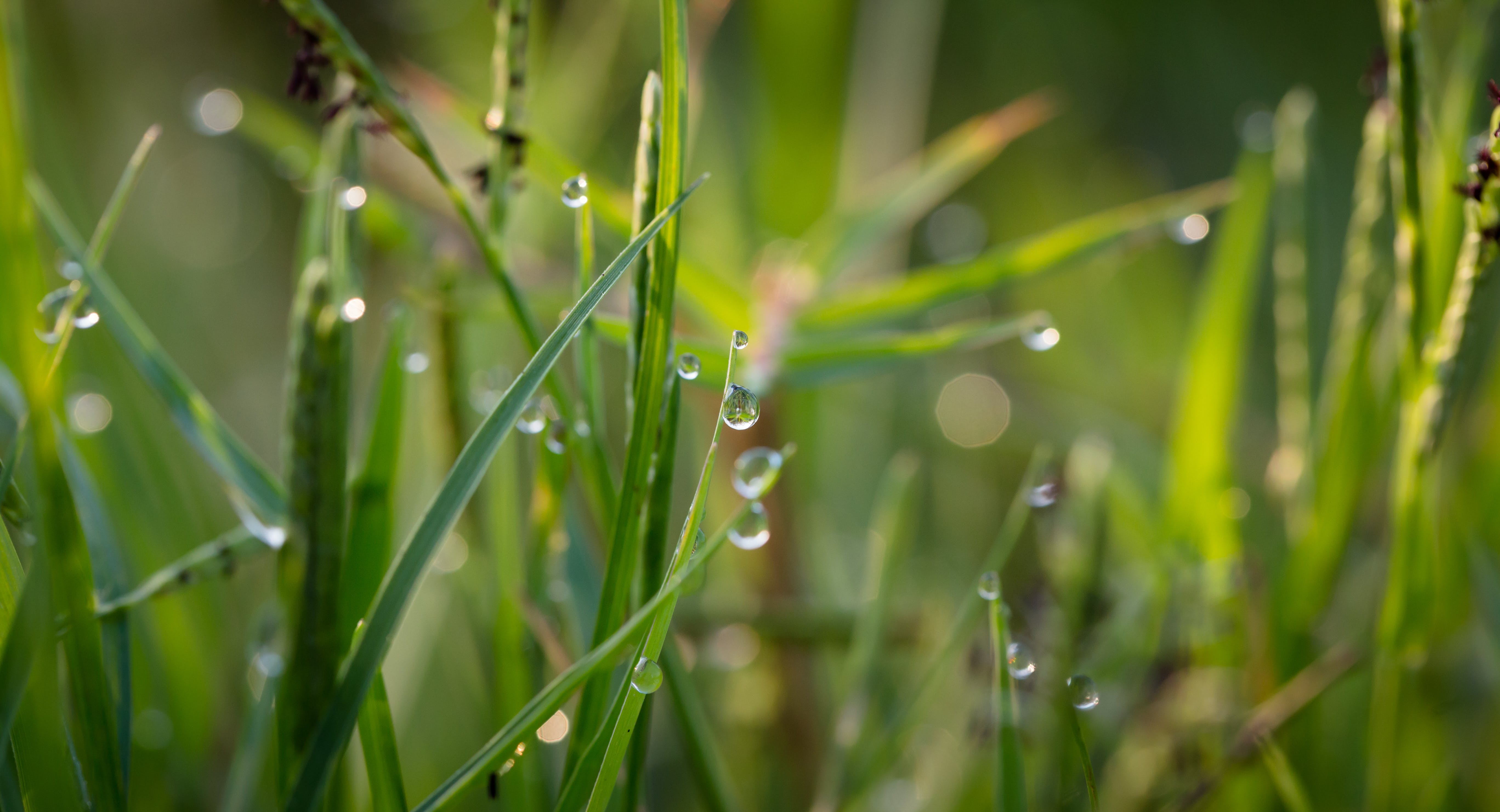 Grass With Dew Drops during Daytime