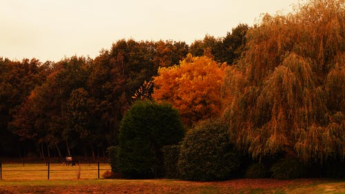 Základová fotografie zdarma na téma kůň, stromy