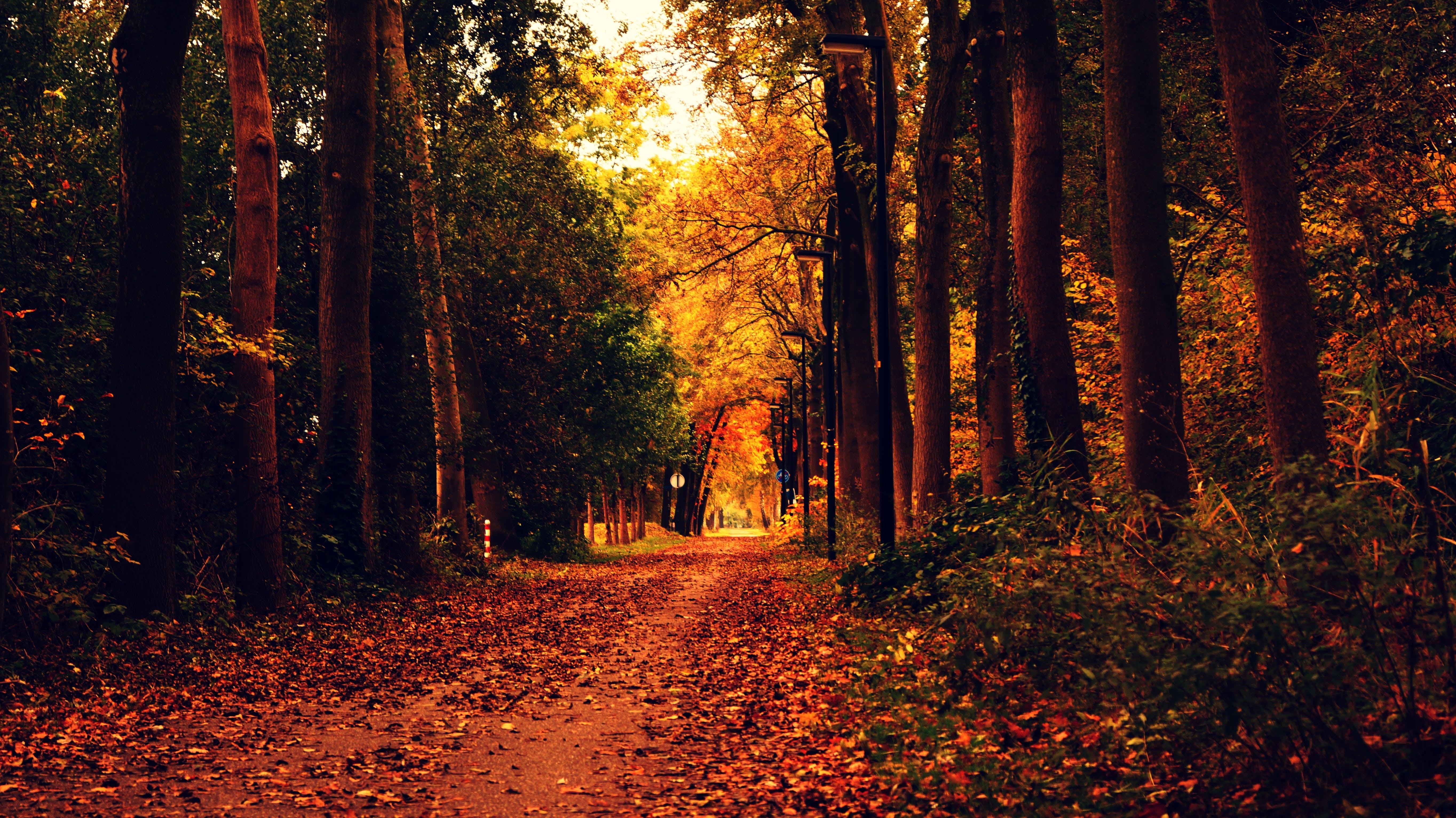 autumn, autumn leaves, dried leaves