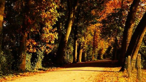 のどか, ガイダンス, パーク, 乾燥した葉の無料の写真素材
