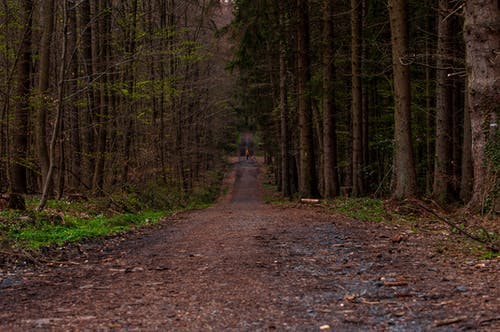 Free stock photo of #nature, forest, forest path, green