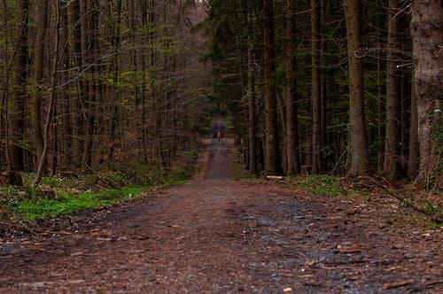 Ilmainen kuvapankkikuva tunnisteilla #nature, metsä, metsäpolku, puut