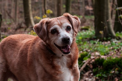 Free stock photo of best friend, dog, dog head, forest