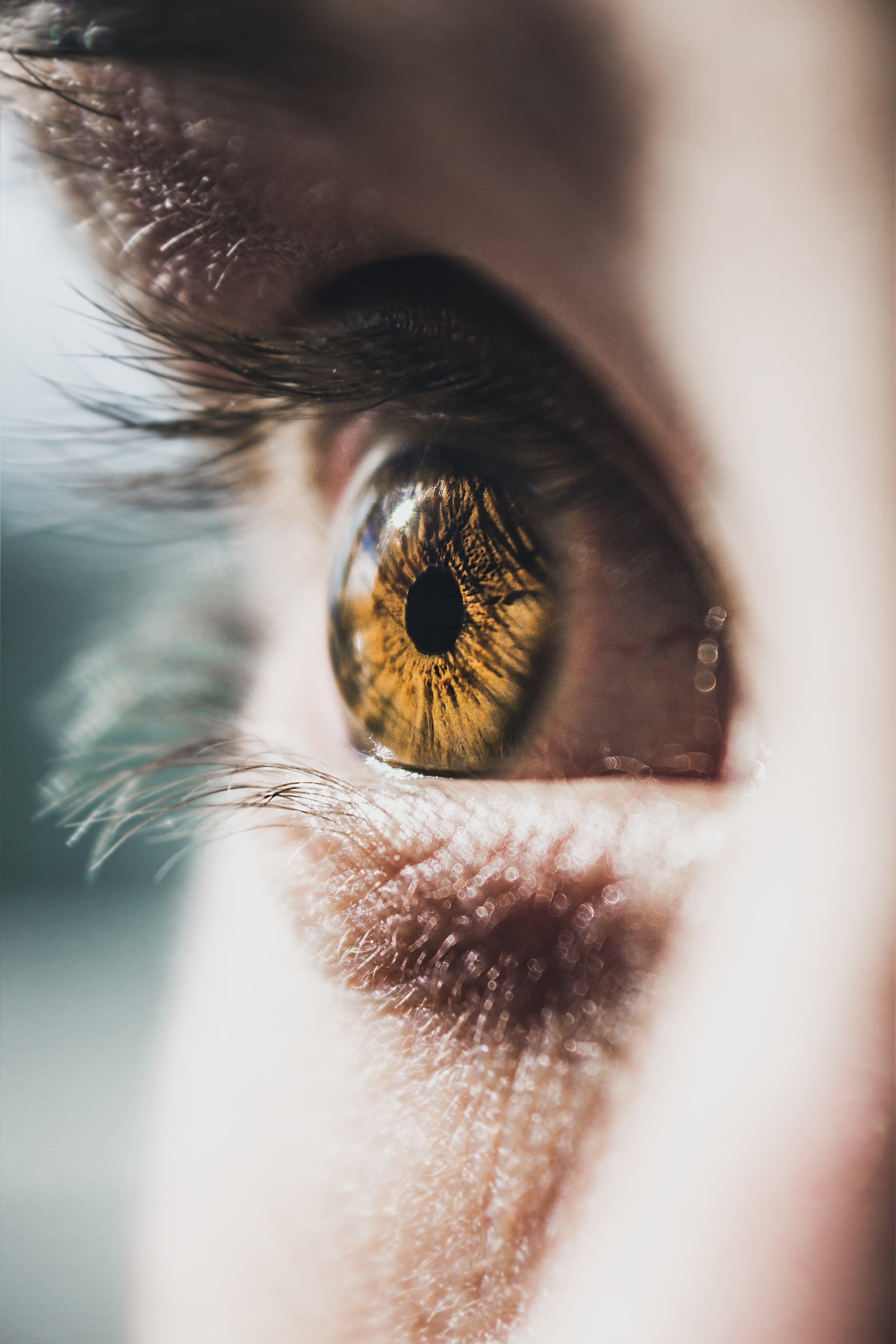 Immagine gratuita di allievo, bulbo oculare, ciglia, concentrarsi