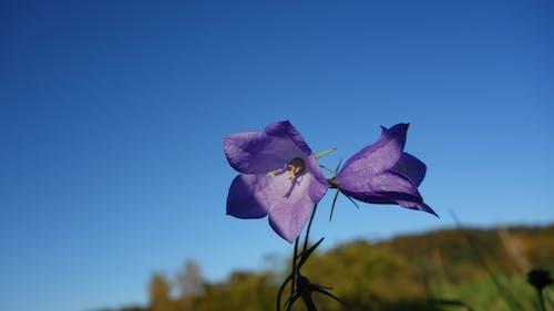 Photos gratuites de ciel bleu, fleur, lumière du jour, macro