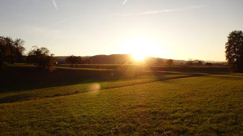 Darmowe zdjęcie z galerii z bezbarwne niebo, drzewa, lensflare, zachód słońca