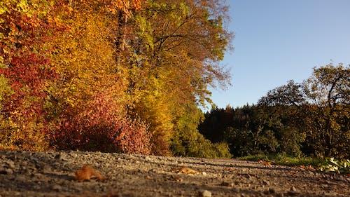 Darmowe zdjęcie z galerii z błękitne niebo, czerwony, drzewa, kamienie