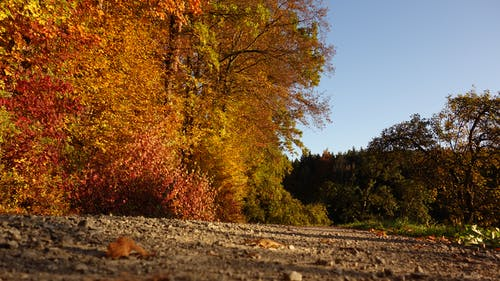 Photos gratuites de arbres, cailloux, ciel bleu, jaune