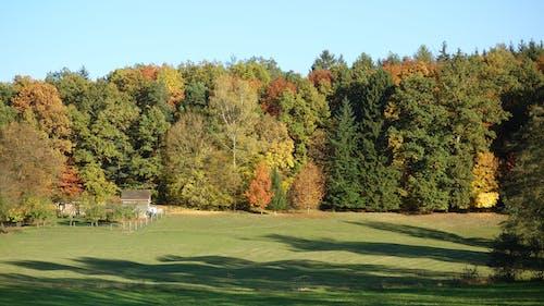 Darmowe zdjęcie z galerii z błękitne niebo, jesienny las, naiwny spacer, zielone pola