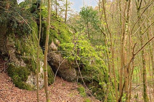 森林, 樹, 綠林, 費爾斯 的 免費圖庫相片