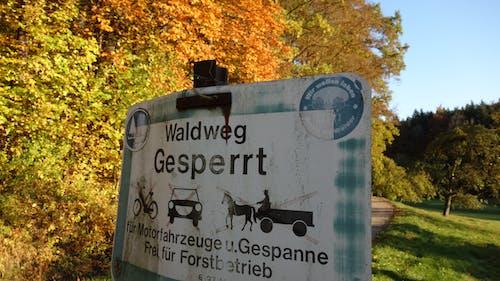 Photos gratuites de ciel bleu, enseigne, forêt automne, marche d'automne