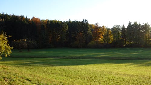 Darmowe zdjęcie z galerii z błękitne niebo, drzewa, jesienny las, słoneczny