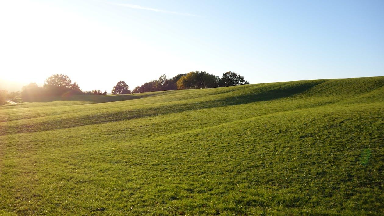 arbres, champs verts, ciel bleu