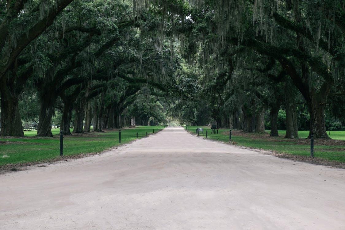 cesta, charlestonu, chodník