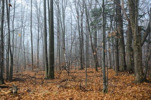 Free stock photo of dry leaves, fog, forest, orange