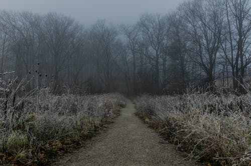 Free stock photo of early morning, fog, forest, frosty