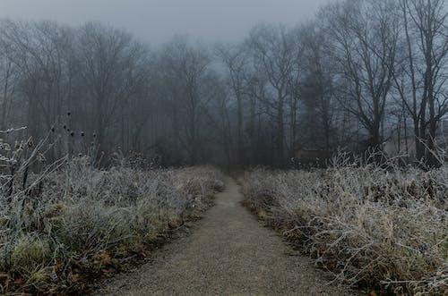 Fotobanka sbezplatnými fotkami na tému chodník, hmla, les, mrazivo