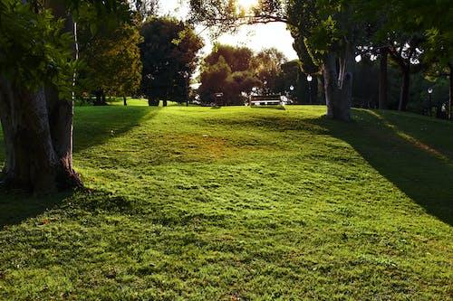Základová fotografie zdarma na téma krajina, park, slunce, tráva