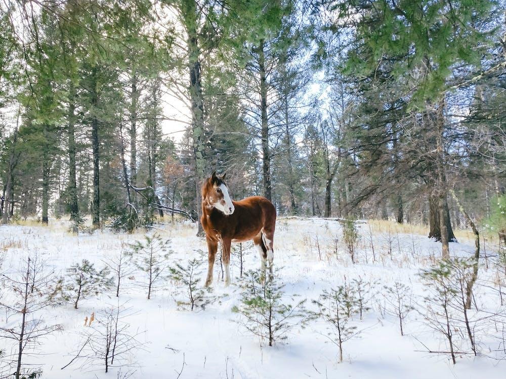 bakgrund, berg, brun häst