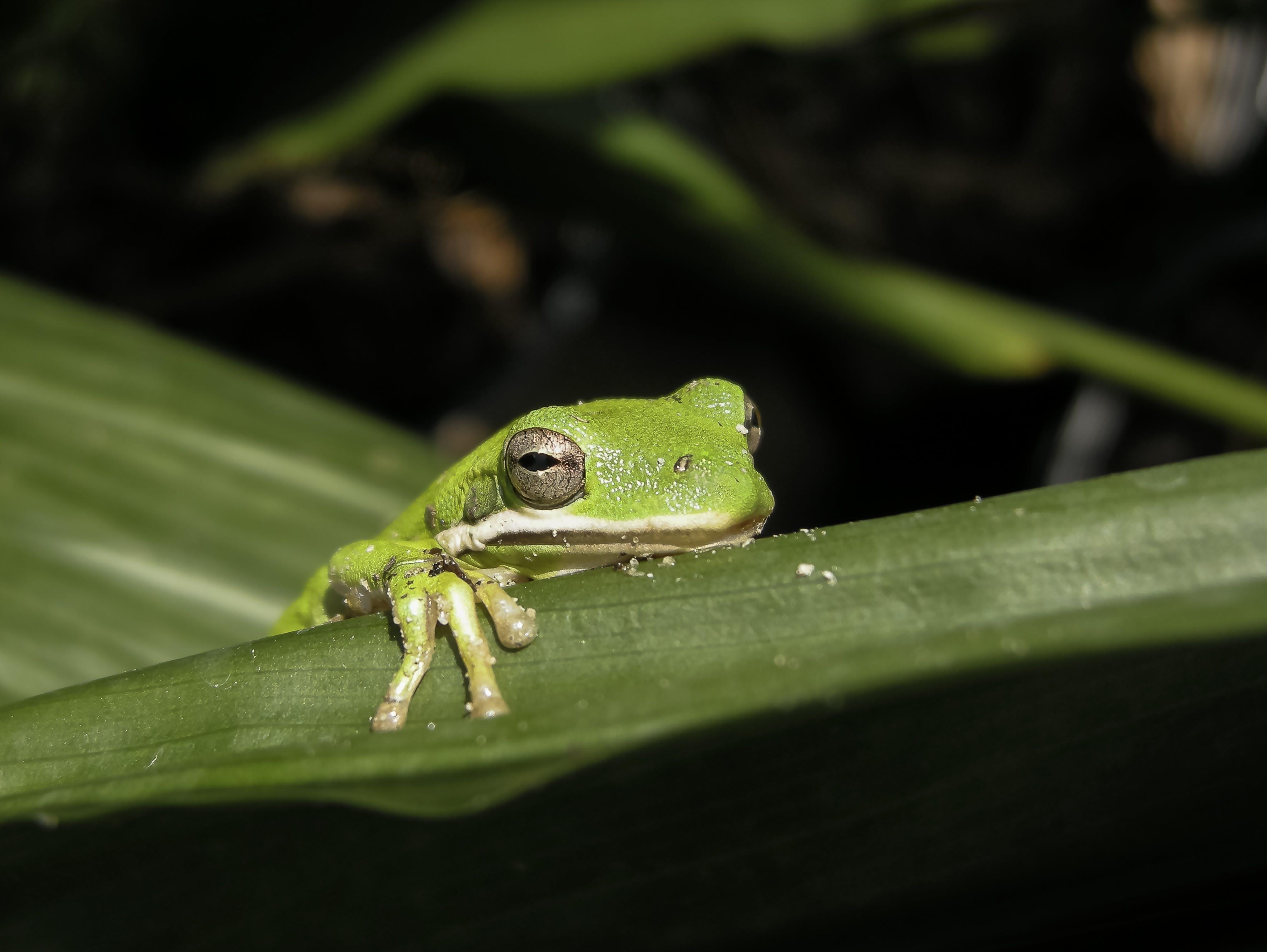 カエル, 両生類, 動物, 動物の写真の無料の写真素材