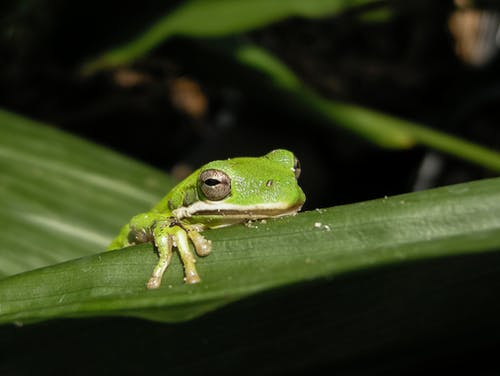 Selective Focus Photography Of Tree Frog