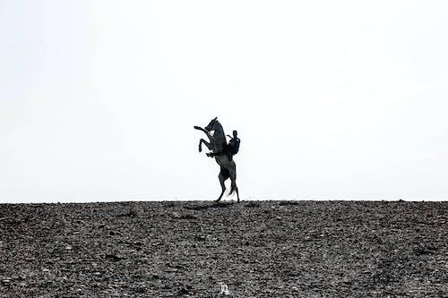 adam, at, dramatik gökyüzü, fotoğrafçı içeren Ücretsiz stok fotoğraf