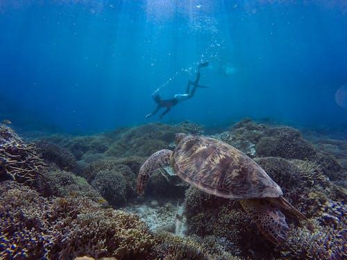 Fotos de stock gratuitas de apnea, bajo el agua, bucear, buzo