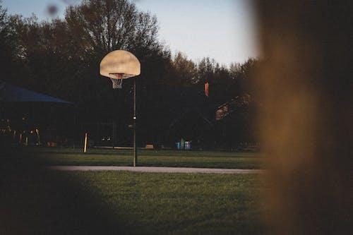 Fotos de stock gratuitas de anillo de baloncesto, arboles, Aro de baloncesto, atleta