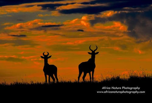Free stock photo of africa safari, tanzania safari, tanzania tours, wildlife