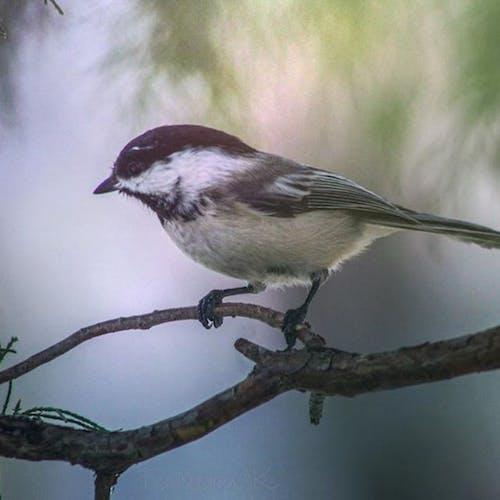 참새의 무료 스톡 사진