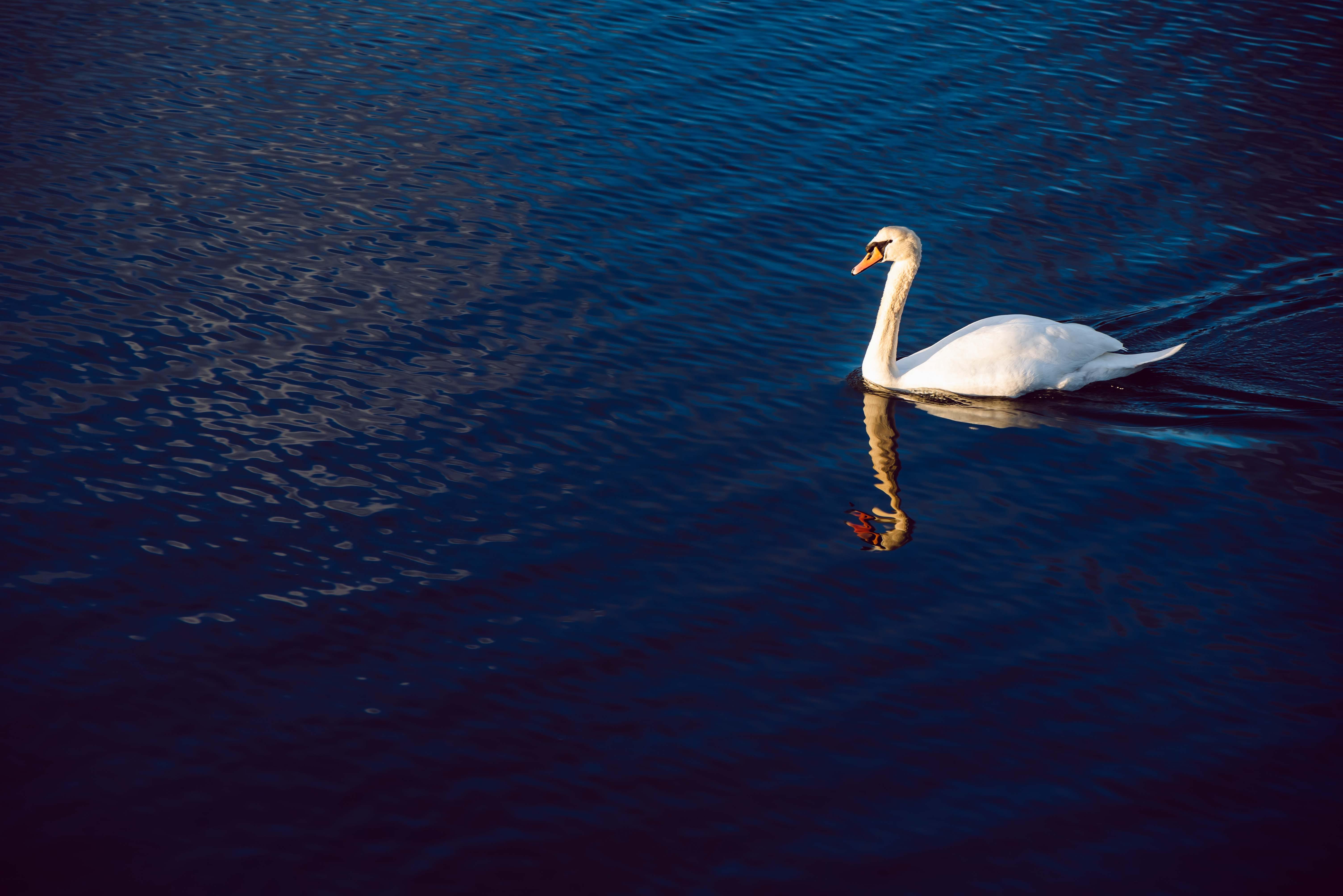 คลังภาพถ่ายฟรี ของ การสะท้อน, ขาว, มหาสมุทร, สวย