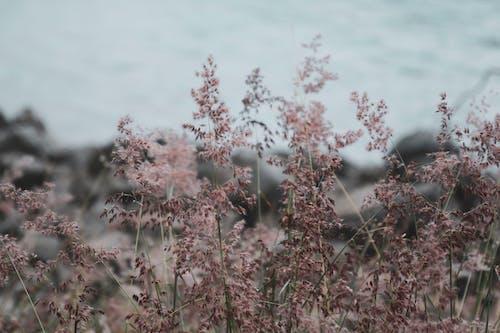 微妙, 植物群, 櫻花, 漂亮 的 免费素材照片