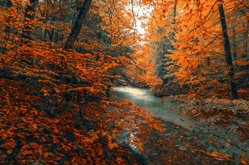 River Between Orange Leaves