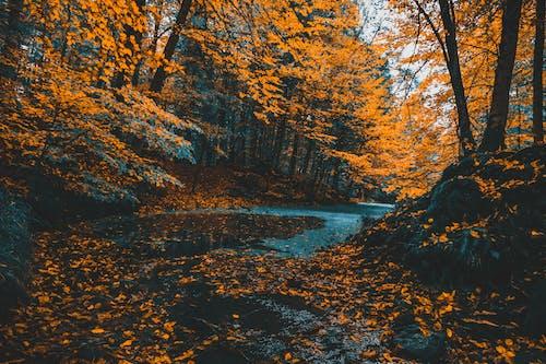 公園, 天性, 季節, 性質 的 免費圖庫相片