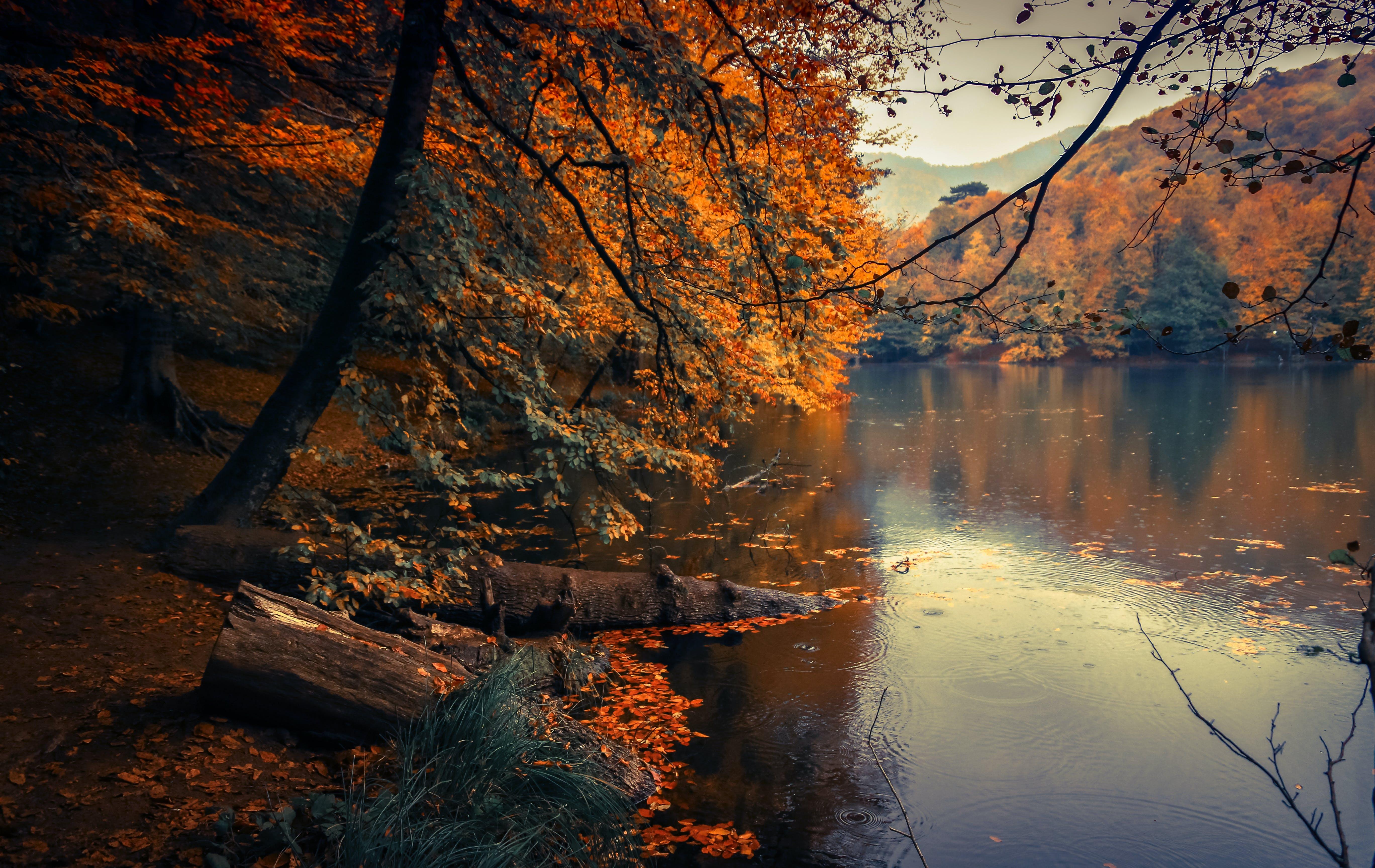 ágak, erdő, esés