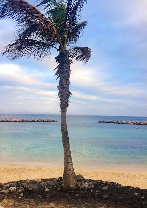 Ilmainen kuvapankkikuva tunnisteilla hiekkaranta, palmu, ranta