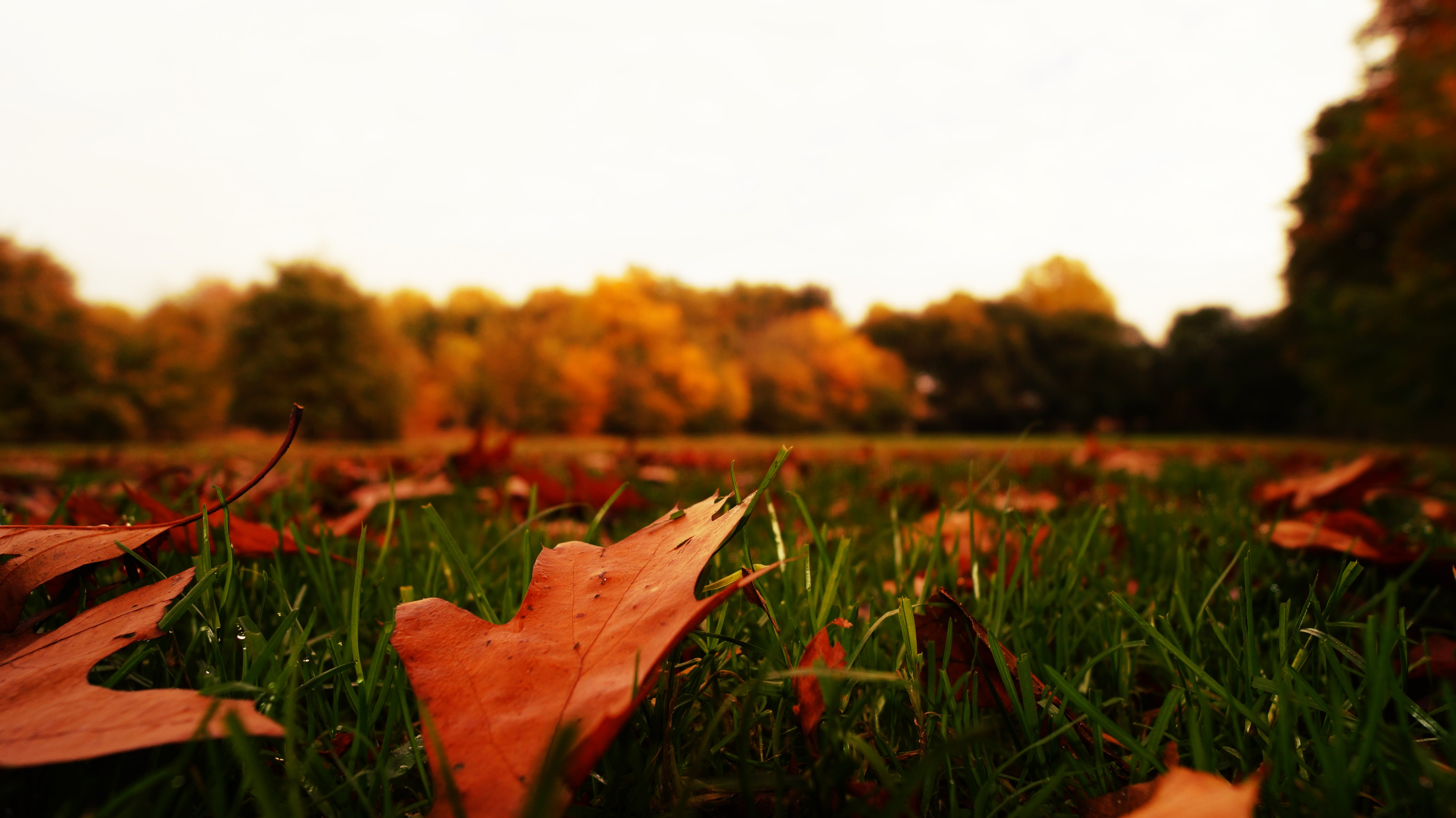 Dried Leaves on Green Grass