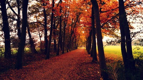 Orange Leaves Covered Pathway Between Trees during Daytime