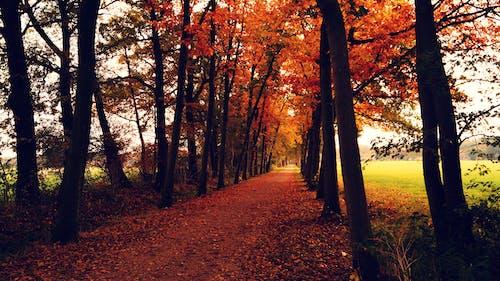 Δωρεάν στοκ φωτογραφιών με γραφικός, δενδροειδές δρόμο, δέντρα, δρόμος