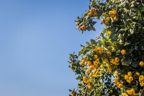 Бесплатное стоковое фото с ветвь, выращивать, дневной свет, живописный