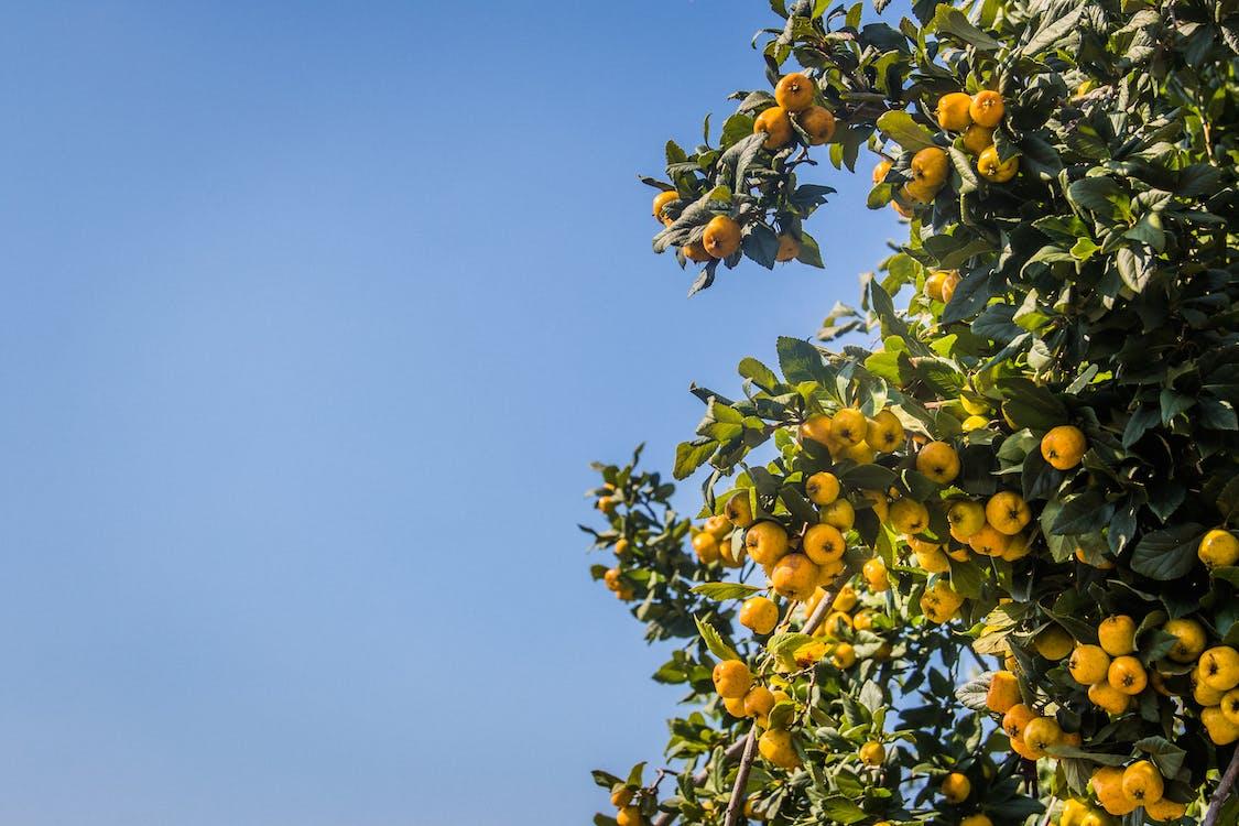 agricultura, ao ar livre, árvore