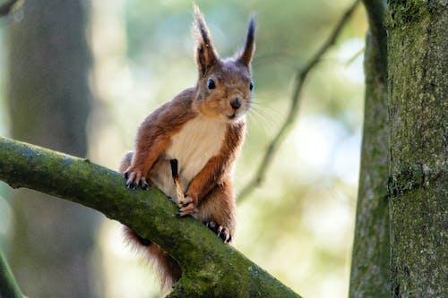 Photos gratuites de écureuil, nature, printemps