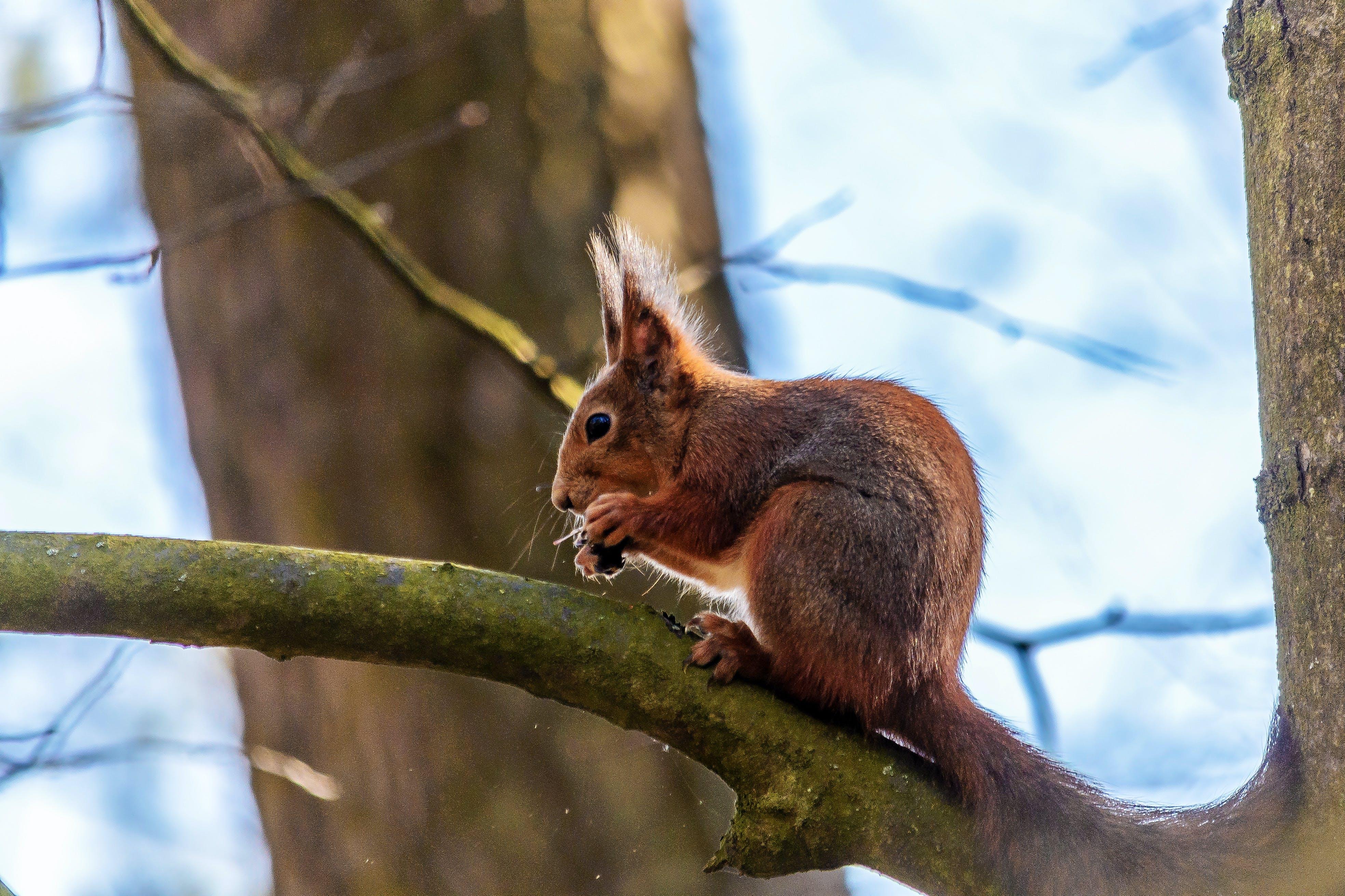 Základová fotografie zdarma na téma jaro, příroda, veverka