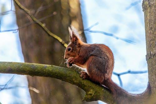 Foto profissional grátis de esquilo, mola, natureza