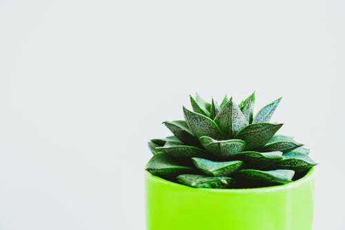 Minimalist Photography of Green Succulent on Green Pot