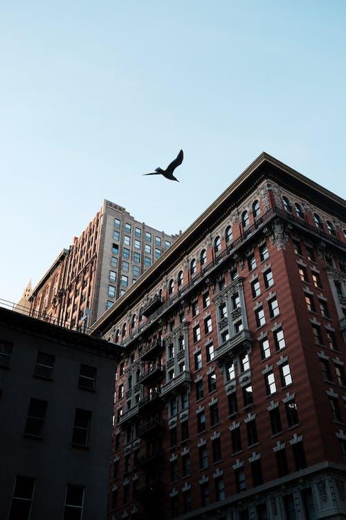 Foto d'estoc gratuïta de a l'aire lliure, apartament, arquitectura, au