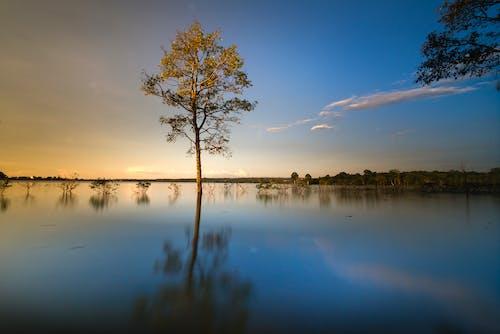 Безкоштовне стокове фото на тему «відображення, вечір, вода, дерево»
