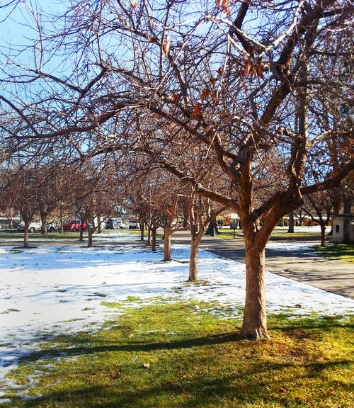 Darmowe zdjęcie z galerii z drzewo, park, śnieg, trawa