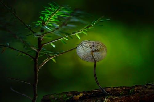 Ilmainen kuvapankkikuva tunnisteilla biologia, hirsi, kasvu, kesä